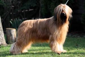 nyuszi-profil